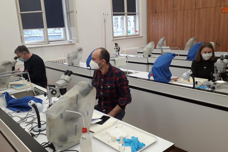 Edukacija za determinaciju kukaca iz roda Oulema